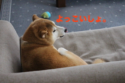 IMG_7390.jpg