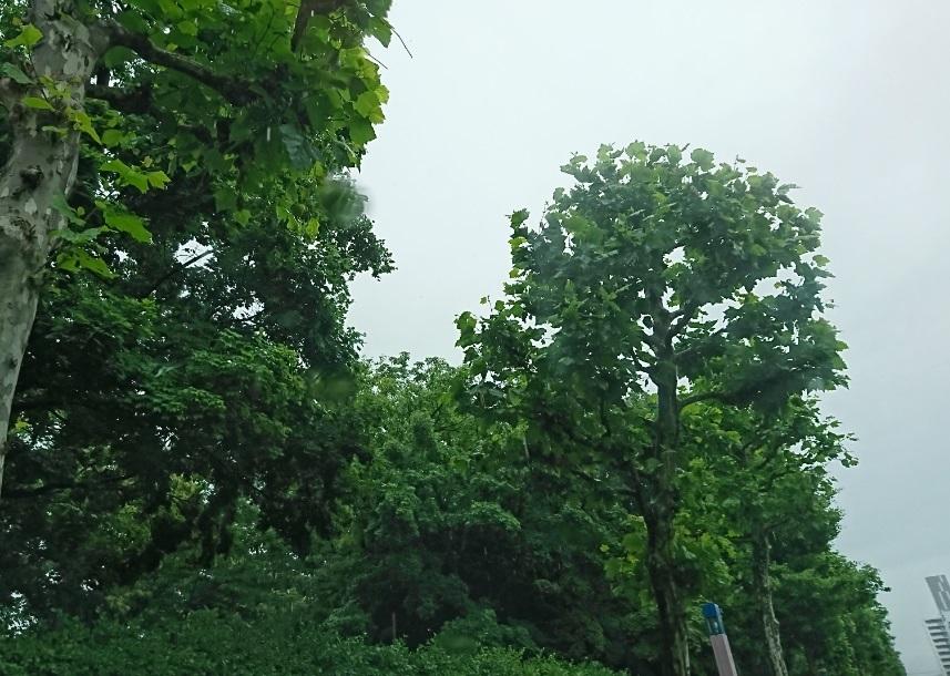 20190622雨空