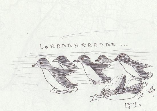 ブルーペンギンコロニー