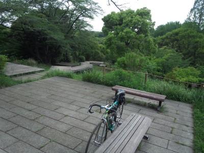 三ツ池公園の新緑