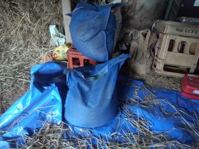 霞ヶ浦 小麦の脱穀