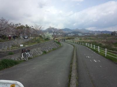 photo_randner_kyouto_sakura_2019_1_10_2019_04031.jpg