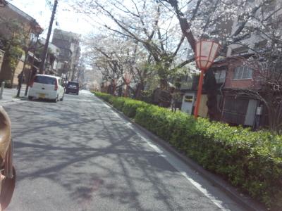 photo_randner_kyouto_sakura_2019_1_24_2019_04031.jpg