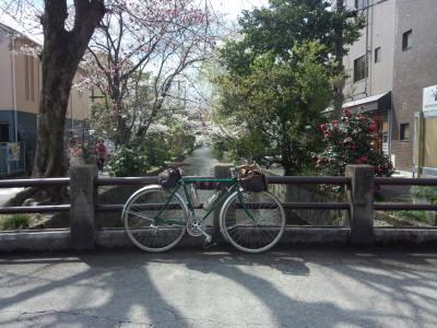 photo_randner_kyouto_sakura_2019_1_27_2019_04031.jpg