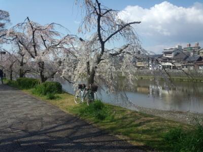 photo_randner_kyouto_sakura_2019_1_7_2019_04031.jpg