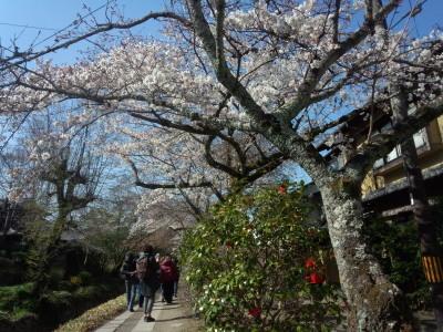 photo_randner_kyouto_sakura_2019_2_5_2019_0404.jpg