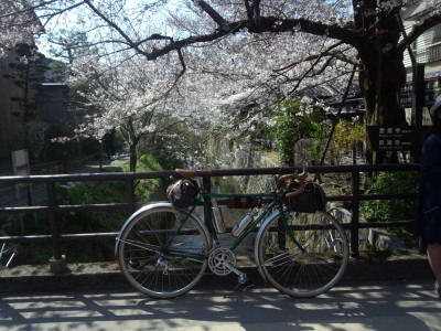 photo_randner_kyouto_sakura_2019_2_7_2019_0404.jpg
