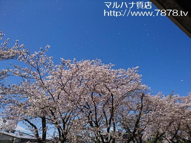 桜吹雪 マルハナ質店