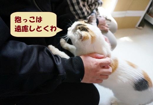みやっち3