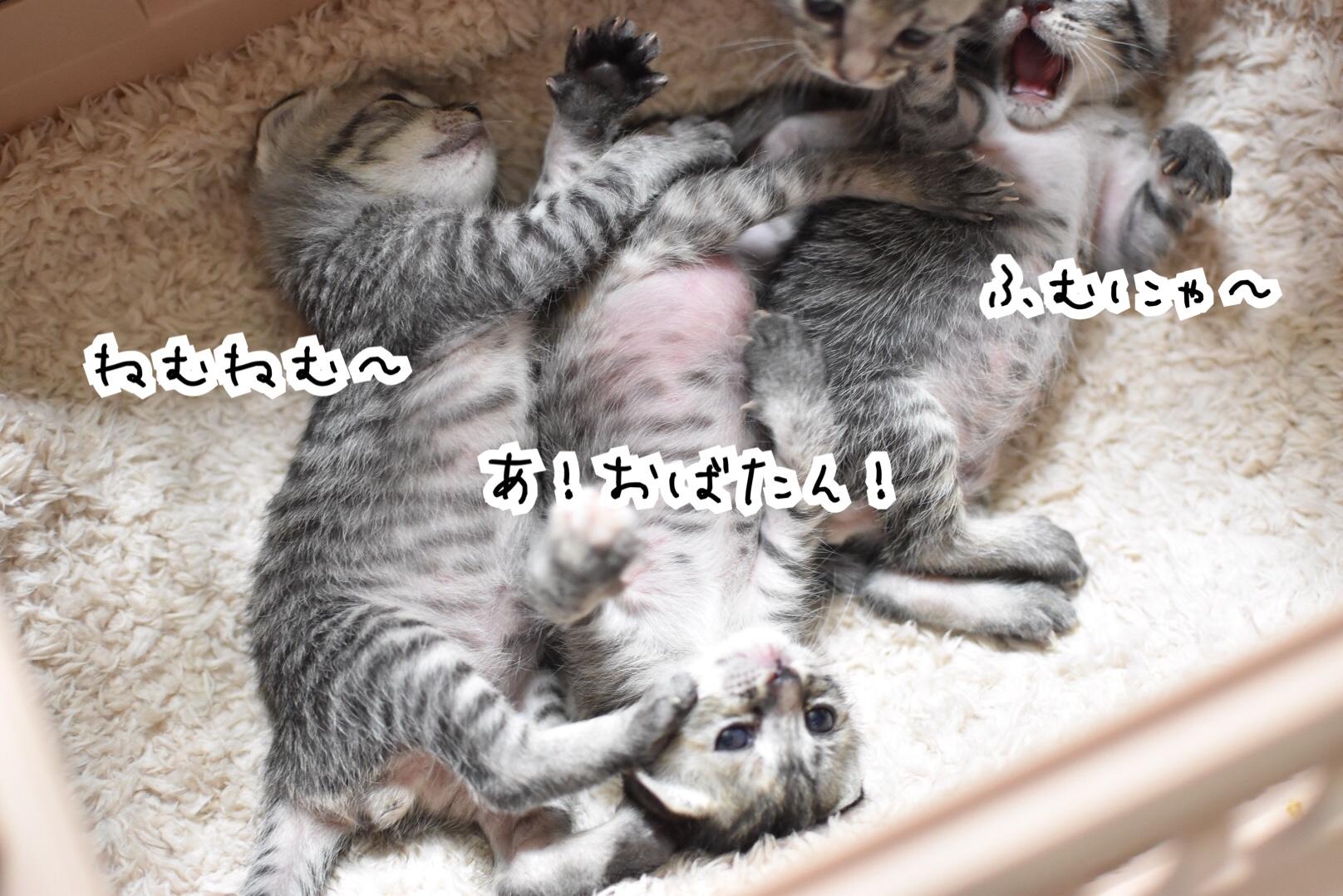 fc2blog_20190419041920384.jpg