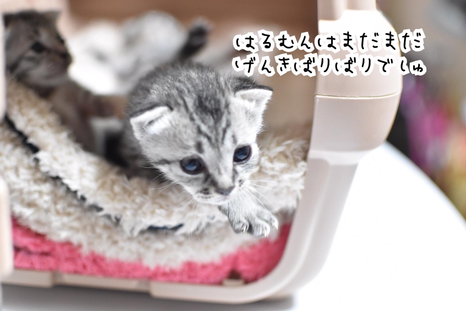 fc2blog_20190419042055d4c.jpg