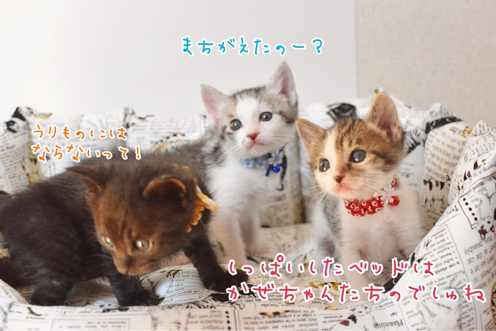 fc2blog_20190523185329a4c.jpg