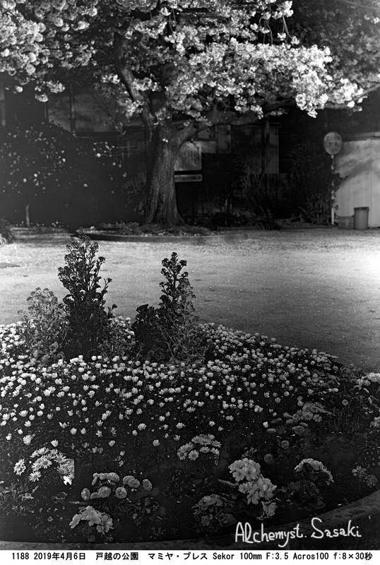 戸越の夜桜1188-3 Ⅱ