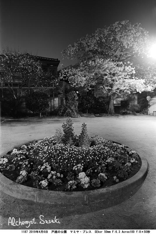 戸越の公園 夜桜1187-5