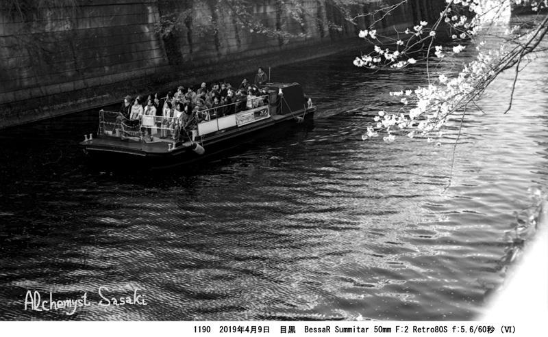 花筏を求めて1190-4