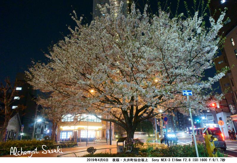 夜桜DSC05097