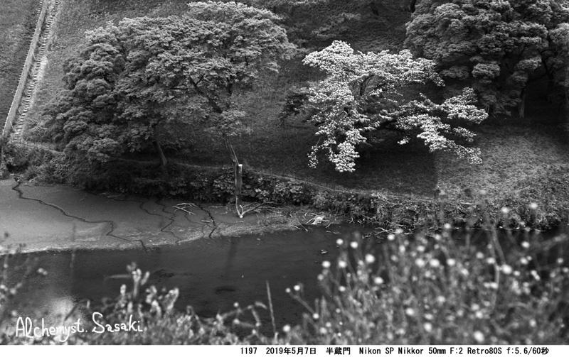 自然の都心1197-27