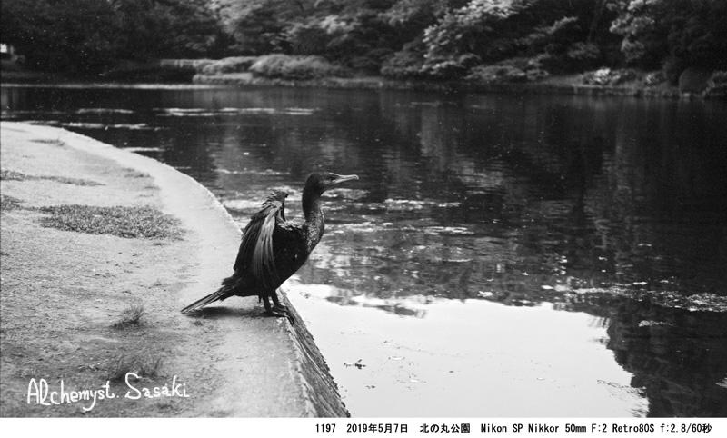 自然の都心1197-39
