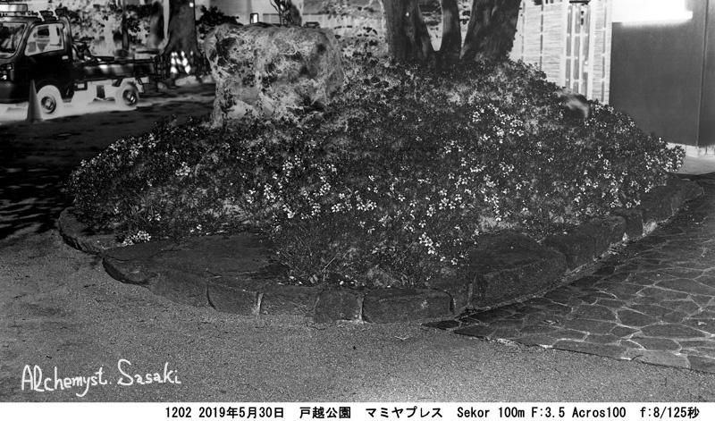 公園のつつじ1202-9 Ⅱ