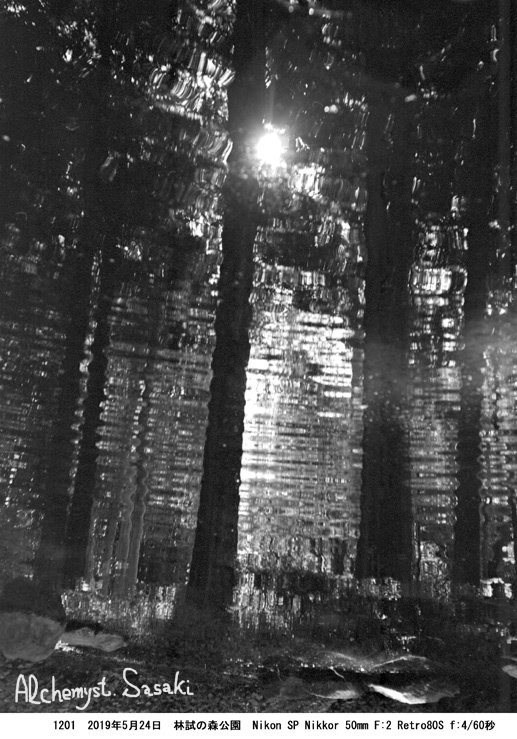 林試の森1201-18