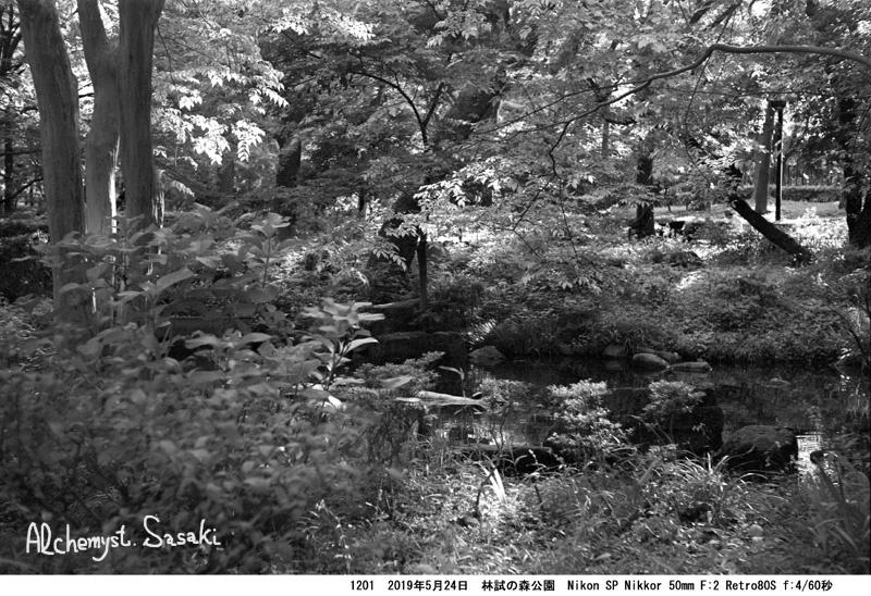 林試の森1201-19