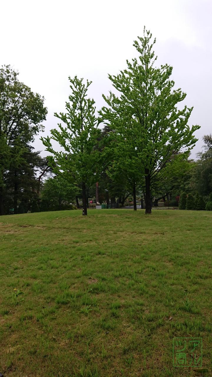 樹木墓地のシンボルツリー