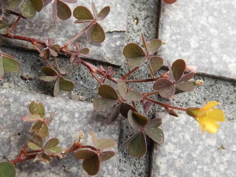 akakatabami180529.jpg