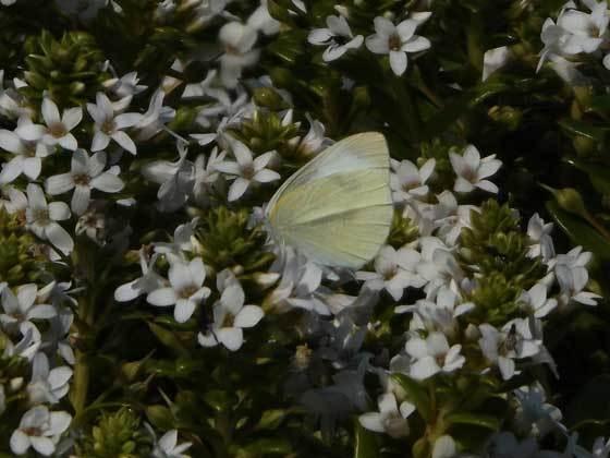 monsirotyou190407-2.jpg