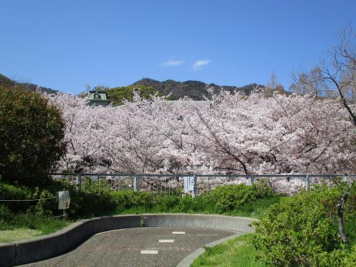 桜♪201904111