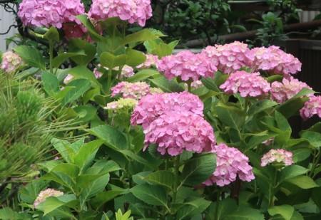 blog japan060519 (10)