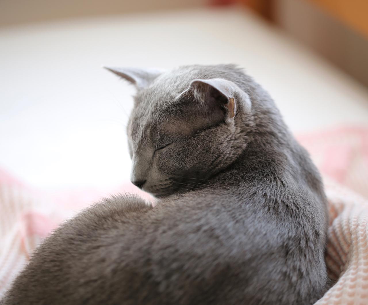 テオ寝てる