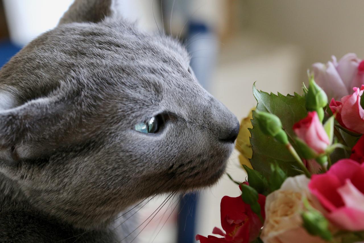 俺と薔薇ちゃん