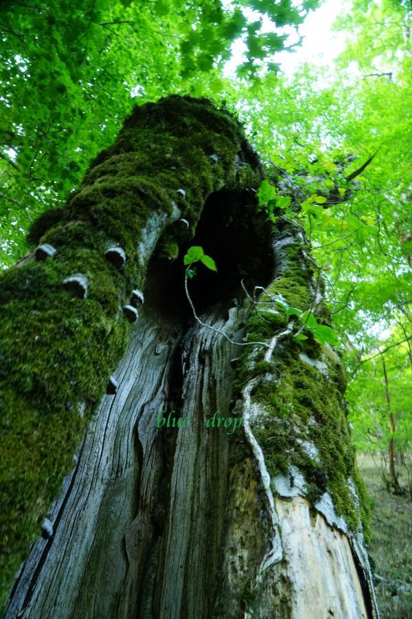老齢な樹*