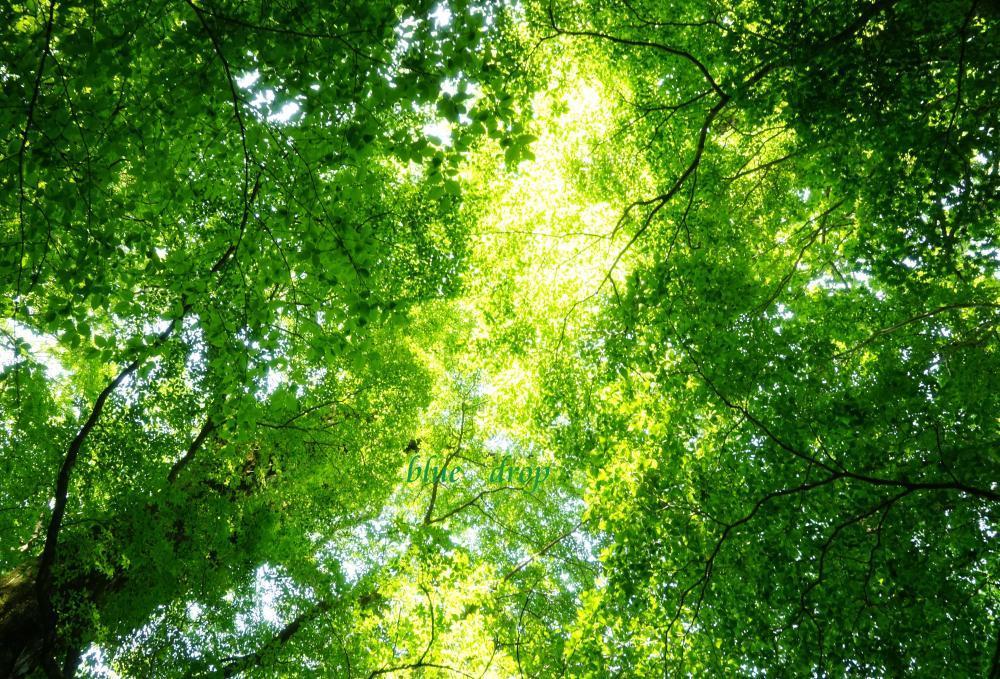 森の天の川*