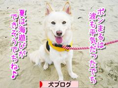 にほんブログ村 犬ブログ MIX中型犬へ