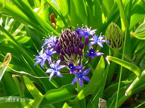 s-紫の花④20190429