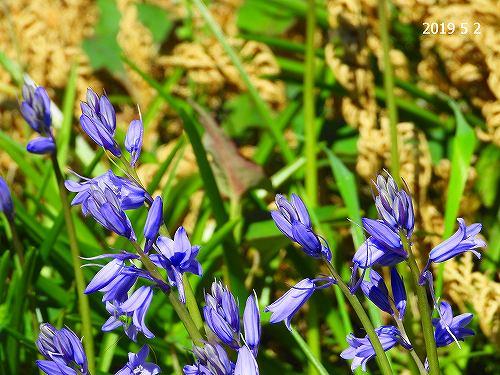 s-紫の花20190502
