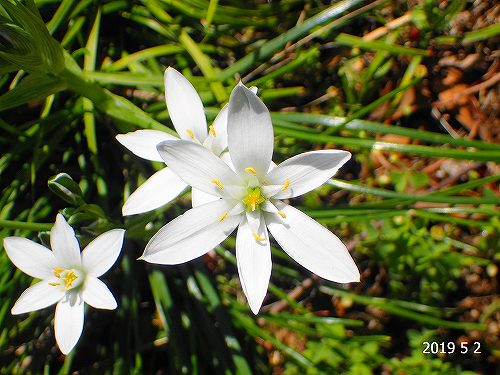 s-白い花②20190502