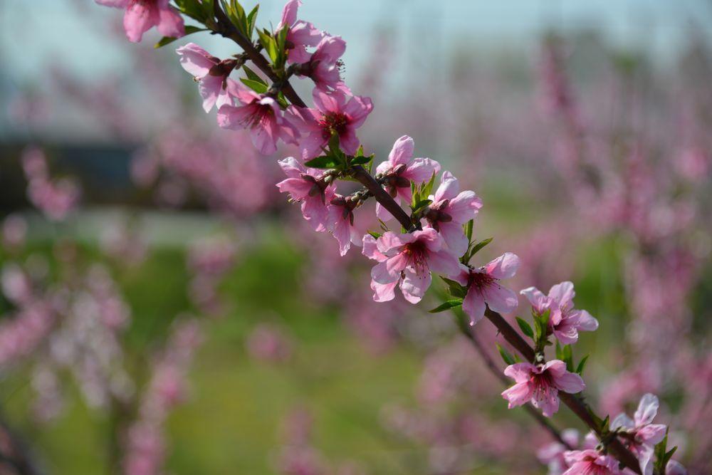 果実の花-6