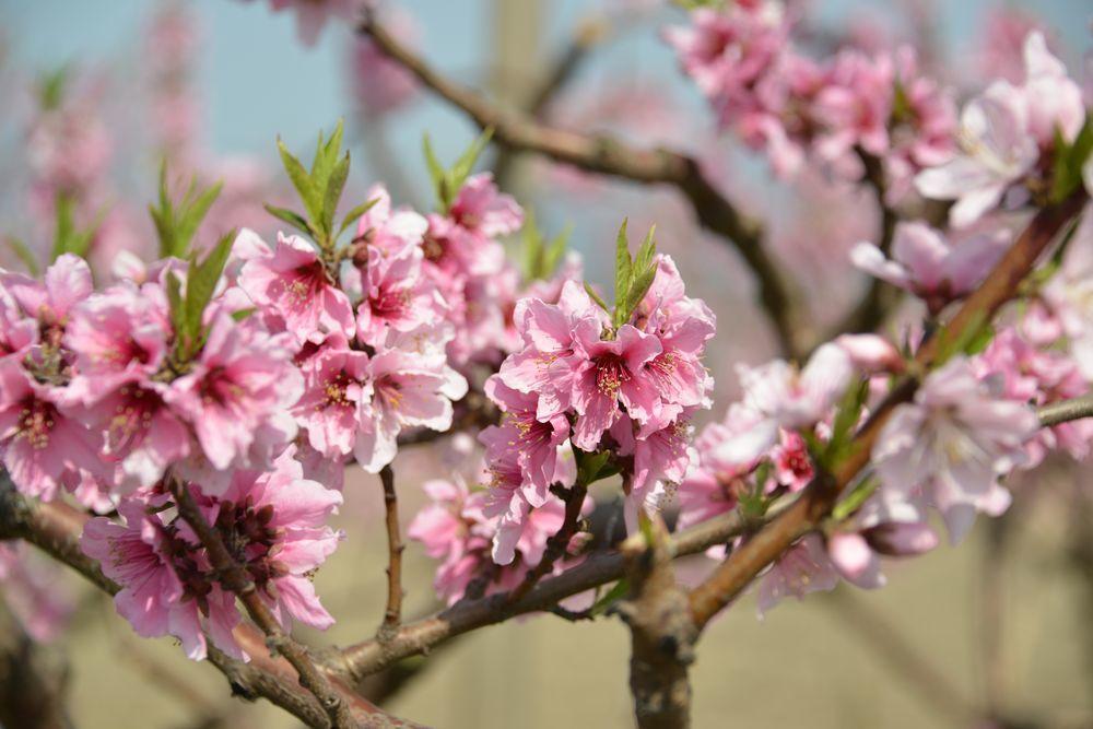 果実の花-7