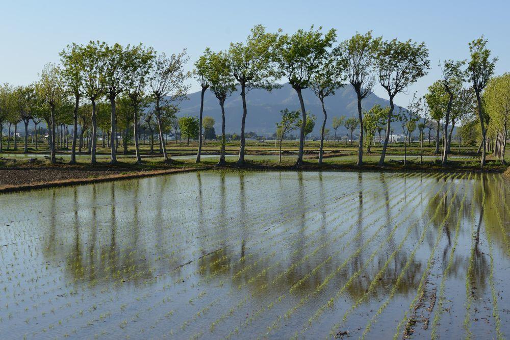 連休の田植え―2