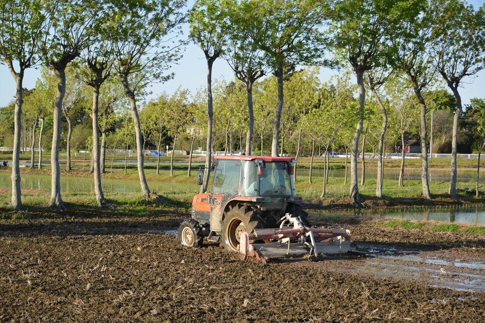 連休の田植え―4