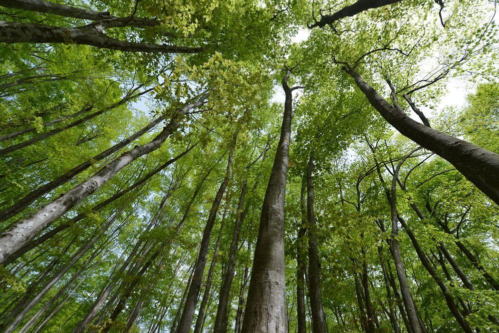 美人林を見上げて-3