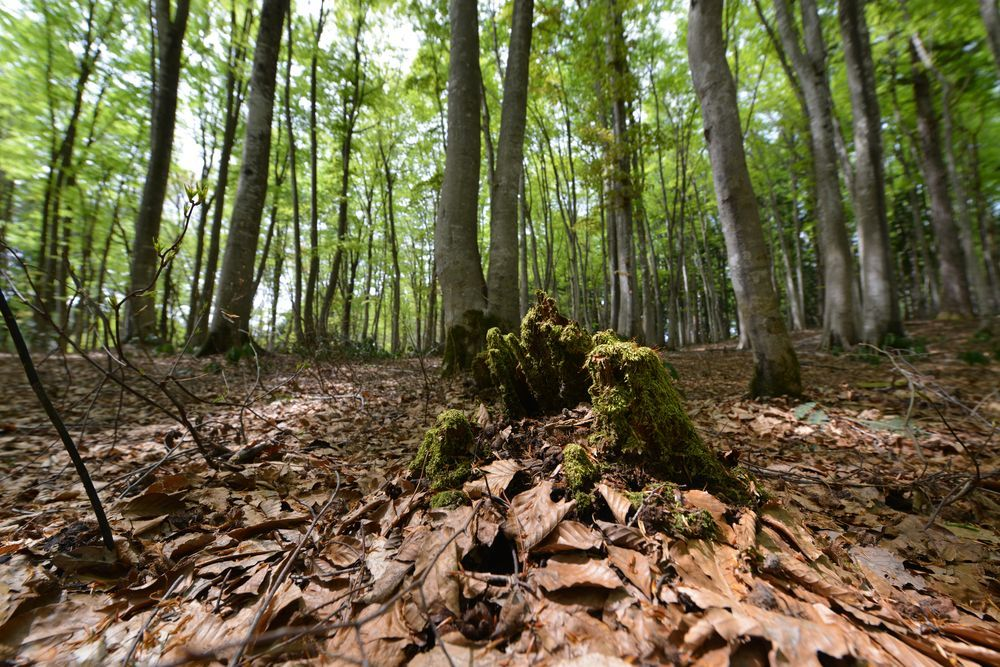 美人林を下から-1