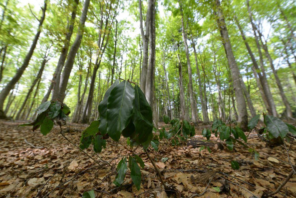 美人林を下から-2