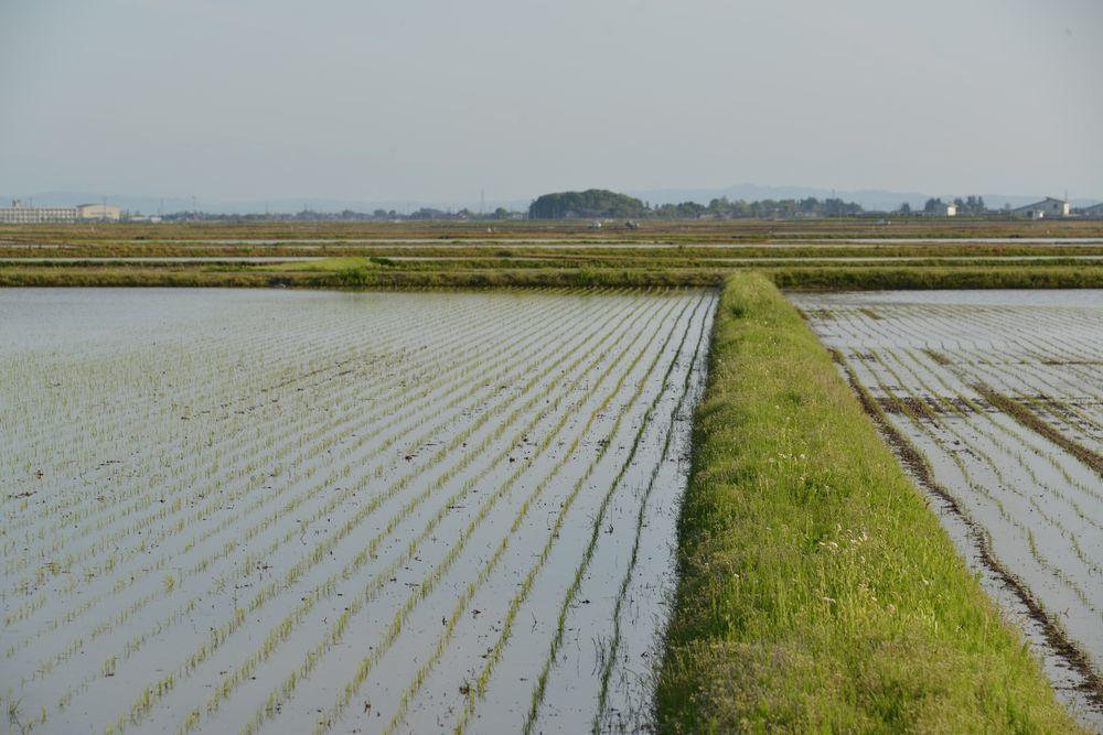 田の中のお宮-3