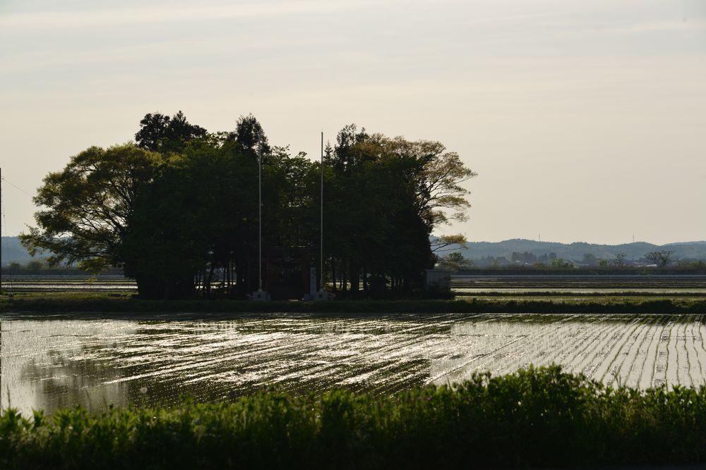 田の中のお宮-4