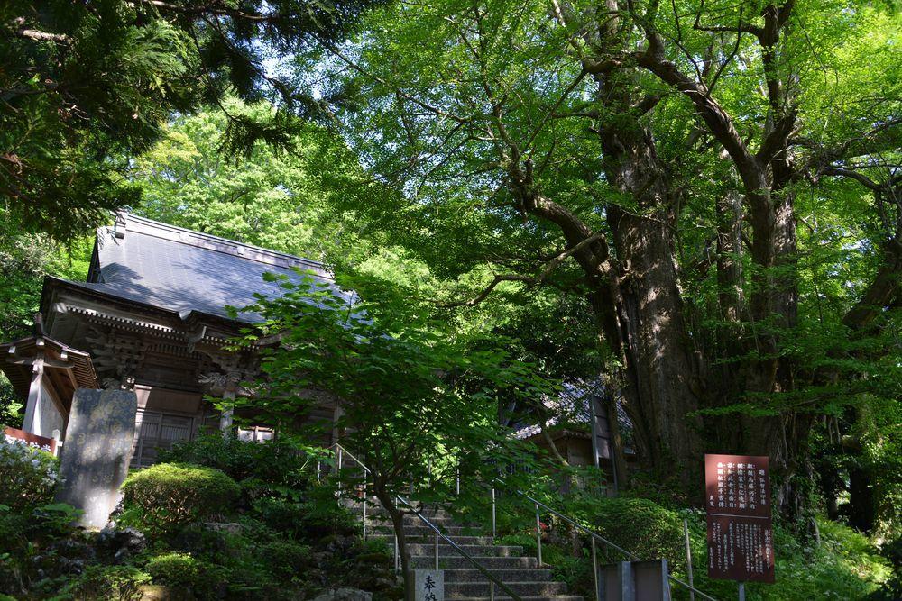 新緑の西生寺-1