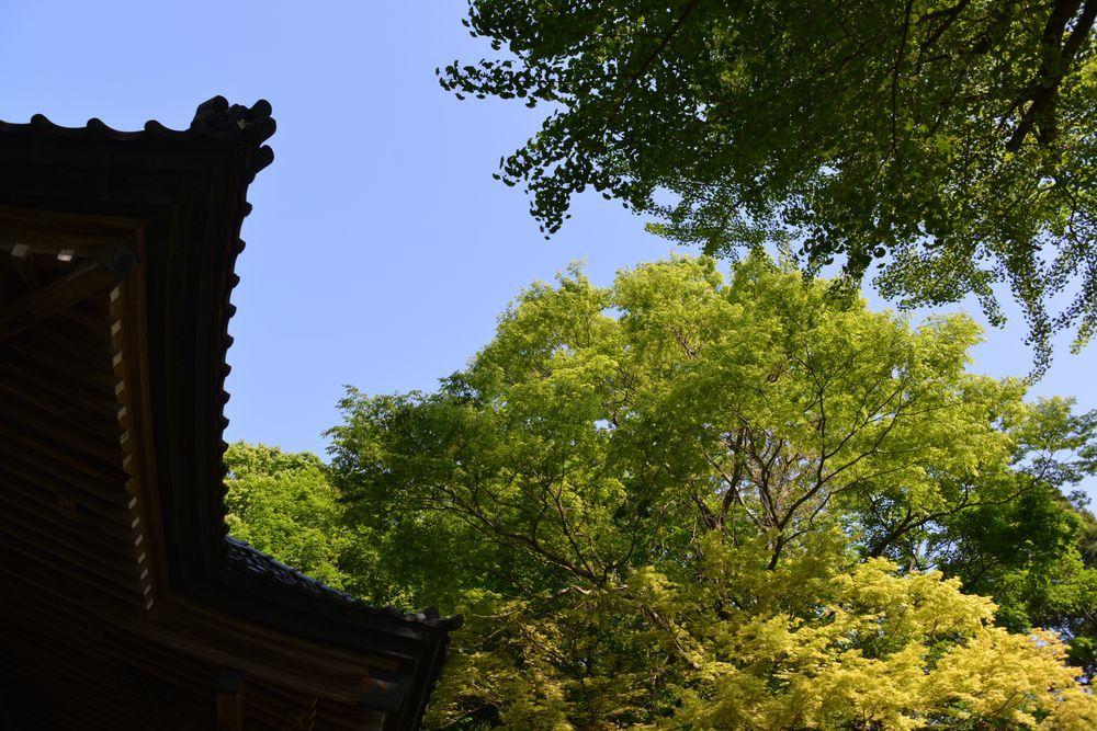 新緑の西生寺-9