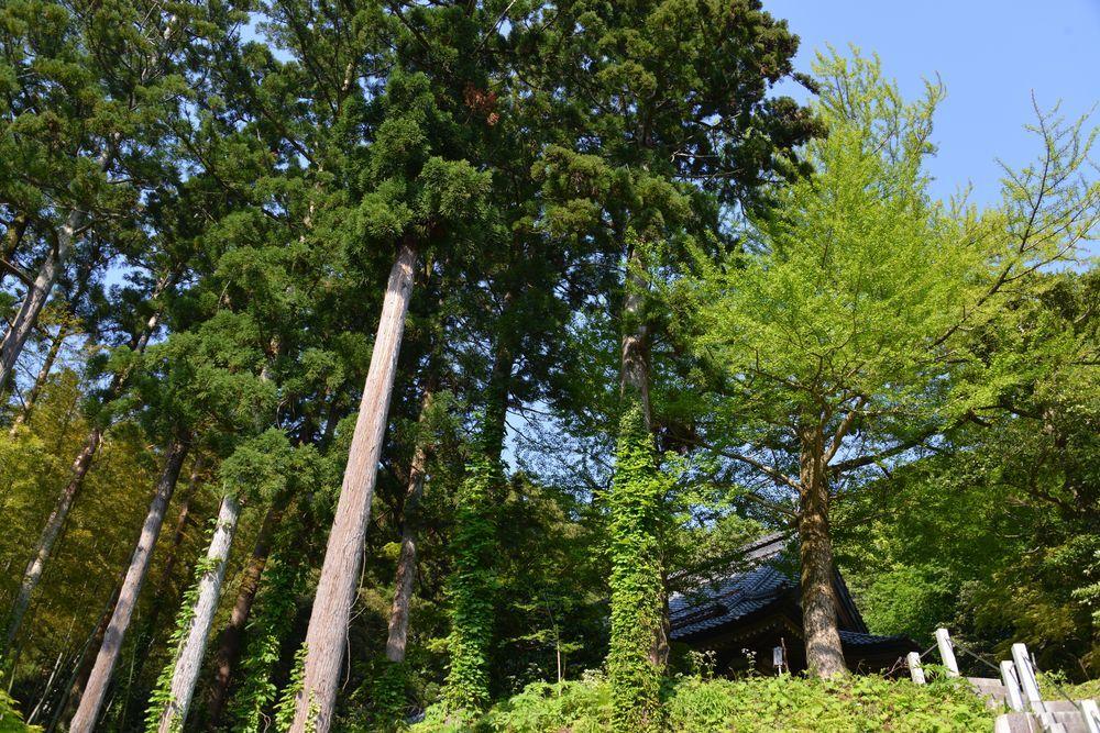 新緑の西生寺-2